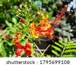 a image of red yellow flower... | Shutterstock . vector #1795699108