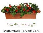 Geranium Flower Jar Box Green