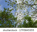 the sky is covered by tree... | Shutterstock . vector #1795845355