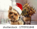 Cute Yorkshire Terrier Dog With ...