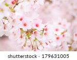 sakura | Shutterstock . vector #179631005