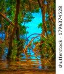 Edge Of Mangrove Swamp In West...