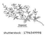 sketch floral decorative set.... | Shutterstock .eps vector #1796549998