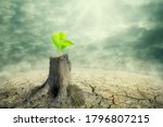 New beginning and the cycle of life concept of hope and recovery as a sapling plant growing from a dead tree as a psychology of a start or young business determination. new business or life metaphor