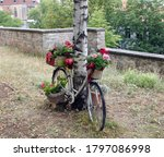 Nice Decorated Bike On A Birch...