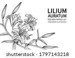 sketch floral decorative set.... | Shutterstock .eps vector #1797143218