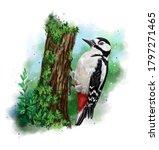The European Woodpecker Is...