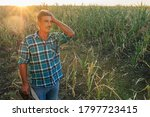 Farmer In The Drought Damaged...