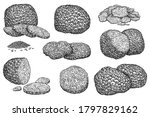 truffle mushroom. expensive... | Shutterstock .eps vector #1797829162