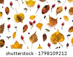 Autumn Colored Leaves And...