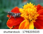 Cricket Insect On Red Yellow...