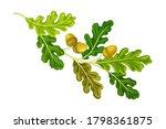 oak tree branch with green...   Shutterstock .eps vector #1798361875