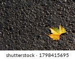 Maple Leaf On The Asphalt Top...