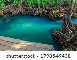Mangrove Trees In A Peat Swamp...