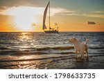 Labrador Dog At Sunset On The...