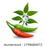 thai paprika red and green...   Shutterstock .eps vector #1798684072