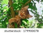 Stock photo a cute tabby kitten european shorthair is climbing in a tree 179900078