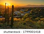 Houses between Saguaros in Tucson Arizona.