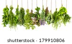 herbs hanging isolated on white ... | Shutterstock . vector #179910806