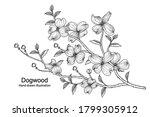 sketch floral decorative set.... | Shutterstock .eps vector #1799305912