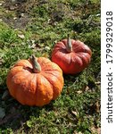 Two Giant Pumpkins On A...