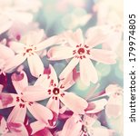 pink flower background close up | Shutterstock . vector #179974805