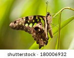 tailed jay  graphium agamemnon   | Shutterstock . vector #180006932