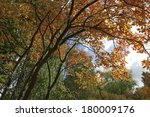 Small photo of Amelanchier lamarckii, Juneberry in autumn