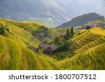 The Longsheng Rice Terraces(Dragon