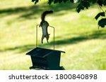 Pesky Squirrel And Bird Feeder. ...