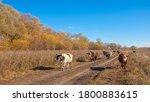 Autumn Photography  Floodplain...