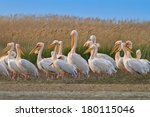 white pelicans in the danube... | Shutterstock . vector #180115046