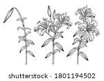 sketch floral decorative set.... | Shutterstock .eps vector #1801194502