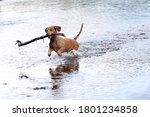 A Dachshund With A Stick In It...