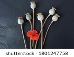 Poppy Boxes With Seeds And A...