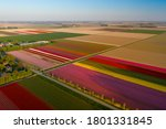 Multi-colored strips of land.  Tulip fields along other agriculture crops