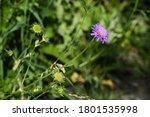 The Long Stemmed Purple Flower...