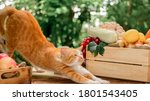 Cat With Eco Fruit And...
