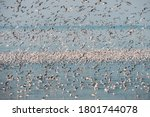 Flock Of Flying Seagulls In The ...