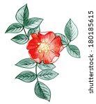flower | Shutterstock . vector #180185615