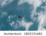 A Mourning Dove In Flight High...