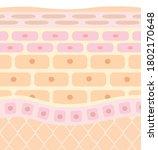 tectonic profile illustration... | Shutterstock .eps vector #1802170648