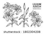 sketch floral decorative set.... | Shutterstock .eps vector #1802304208