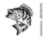 Jumping Perch Fish Monochrome...