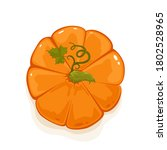 ripe pumpkin top view isolated... | Shutterstock .eps vector #1802528965