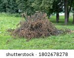 Large Pile Of Dry Branches On...