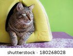 Stock photo cute cat in a green igloo house at home 180268028