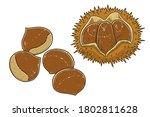 chestnuts and chestnut bur.... | Shutterstock .eps vector #1802811628