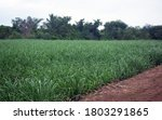 Natural Agriculture Field...