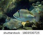 Exotic Fish    Picasso Trigger...